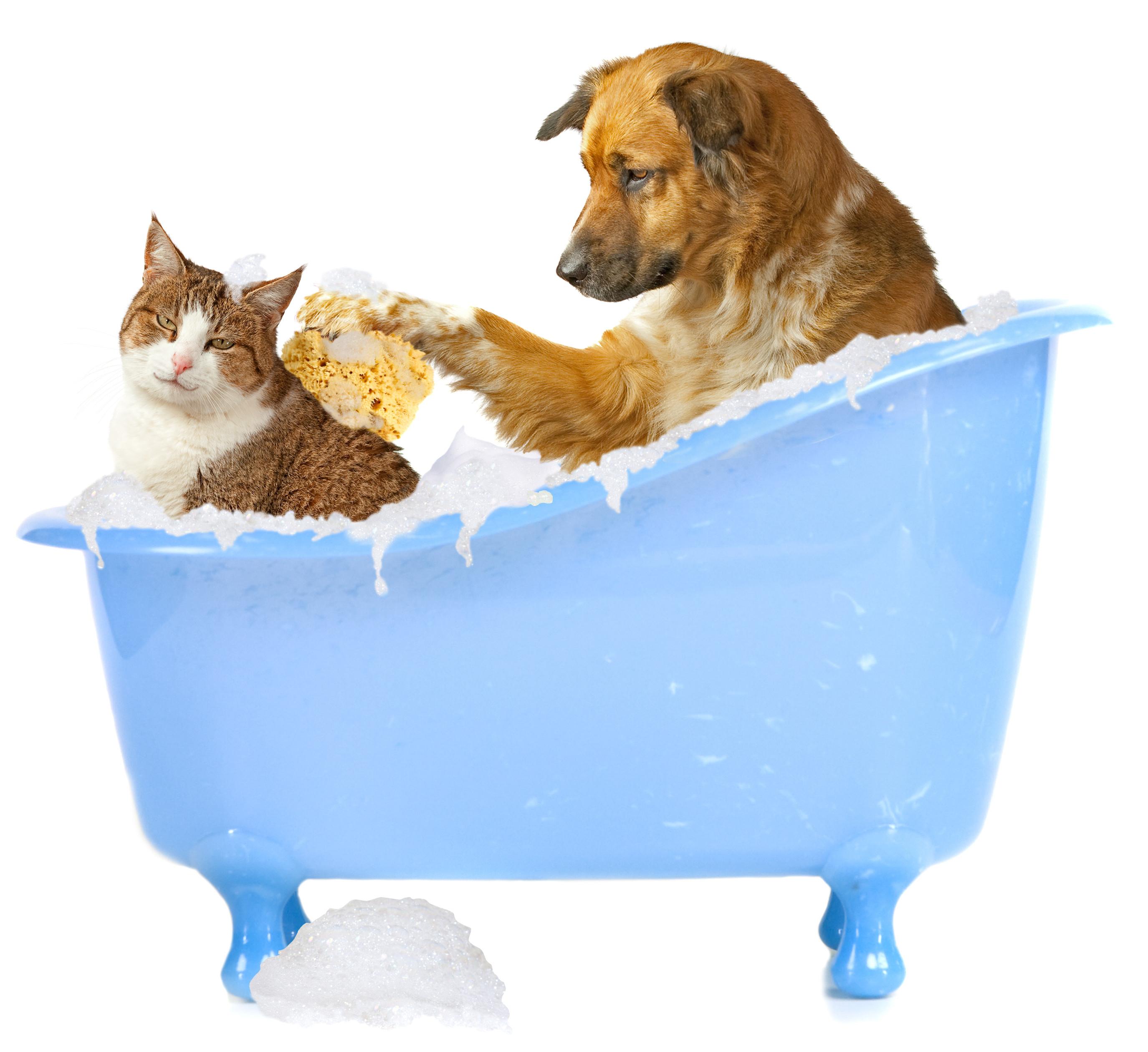 """Aprenda a fazer o """"autoexame"""" em cães e gatos"""