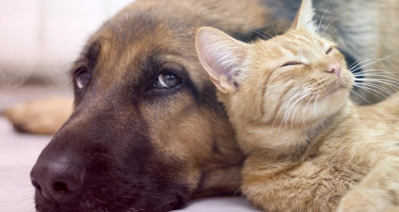 Animais são ótimos aliados para uma melhor qualidade de vida