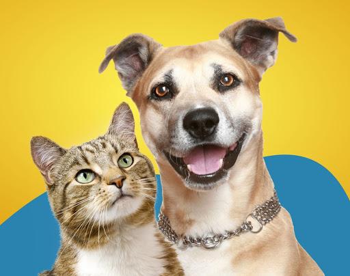 Campanha de vermifugação para cães e gatos – Hospital Veterinário da Universidade Anhembi Morumbi